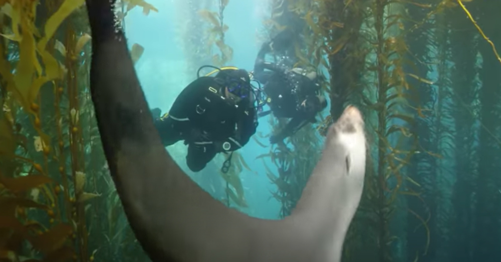 The native and migratory birds, rare migratory sharks, whales, seals, golden undersea forests of kelp, and penguins found at Tristan da Cuhna are collectively valued as aUNESCO World Heritage Site.