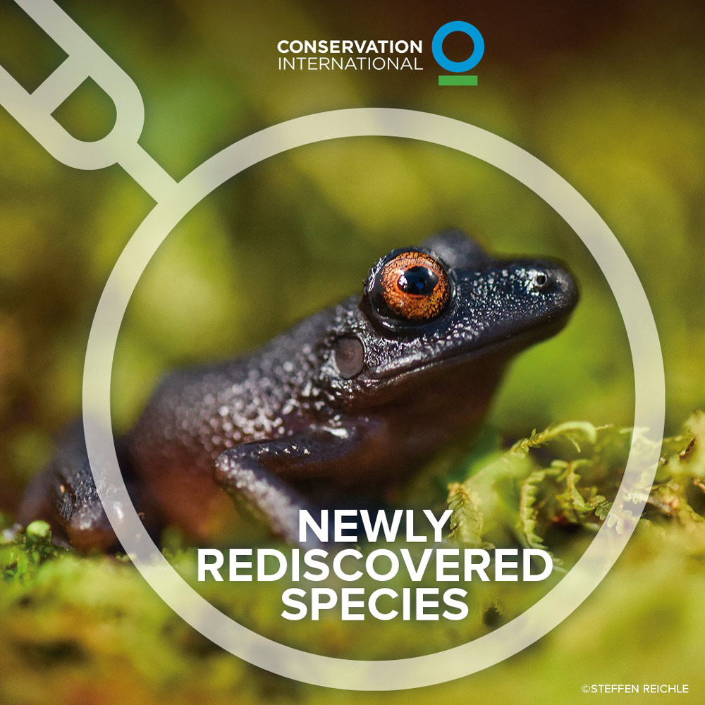 The expedition uncovered a devil-eyed frog, which was previously known only from a single individual observed over 20 years ago but was found abundant in the cloud forest.