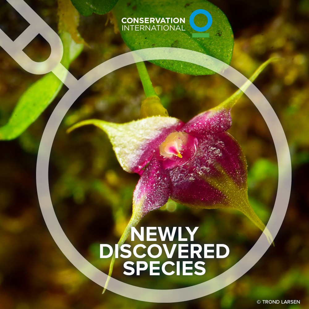 Four new species of orchids were discovered during the expedition.