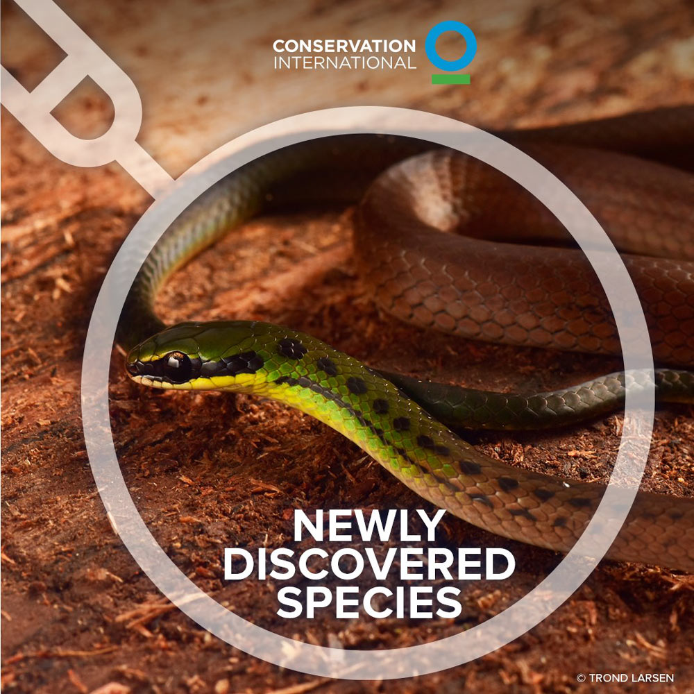 Conservation International & Gobierno Autónomo Municipal de La Paz's expedition high in the Bolivian Andes has unearthed the Bolivian flag snake, a slender creature distinguished by colors similar to the hues of the nation's flag.