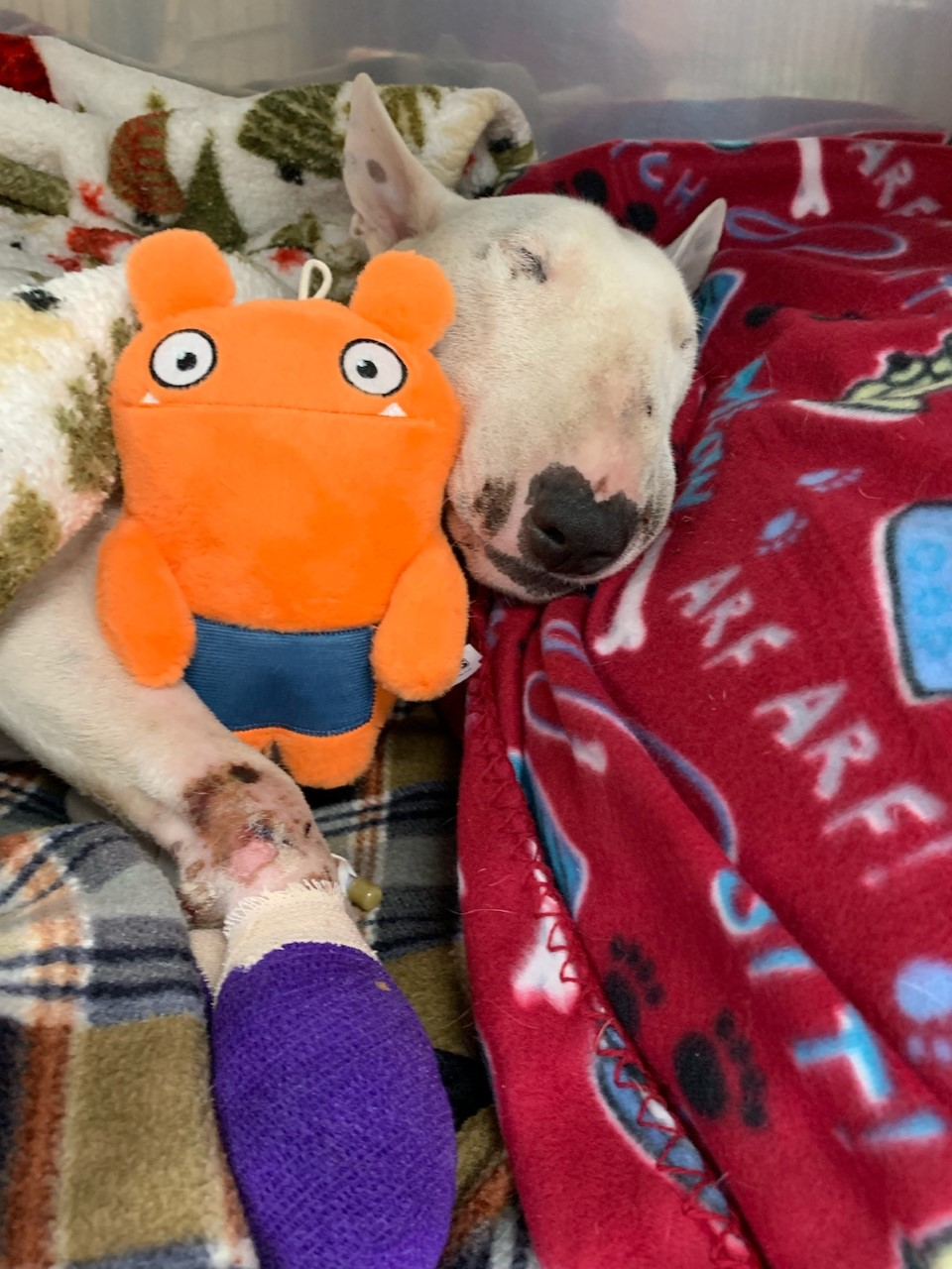 abused rescue dog adopted officer