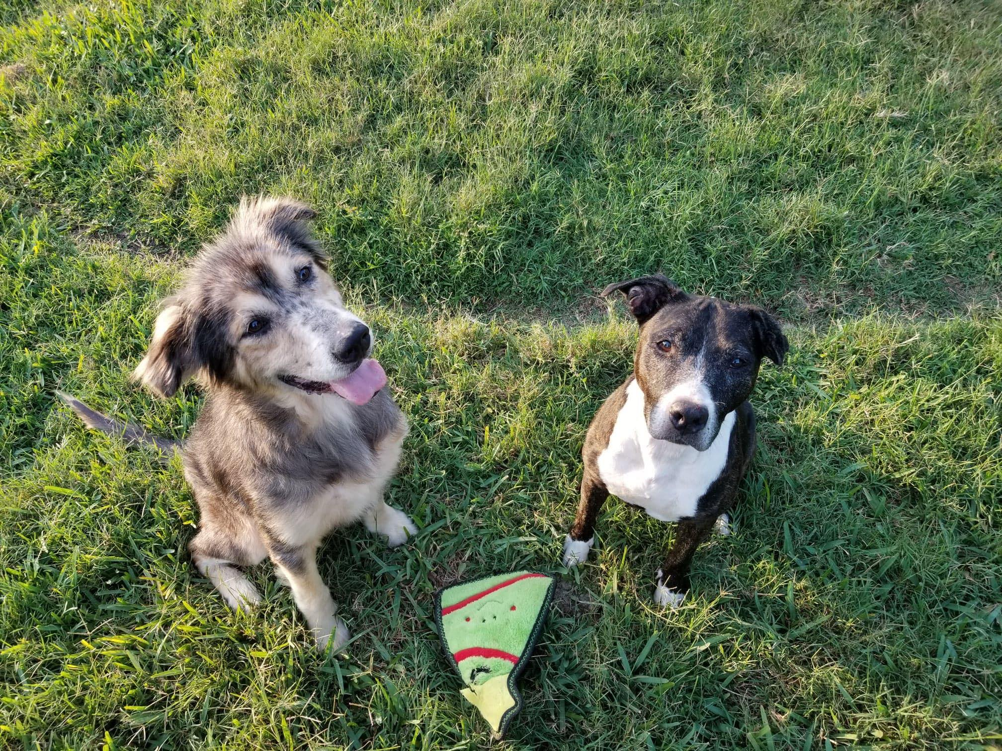 rescue dogs bonded pair