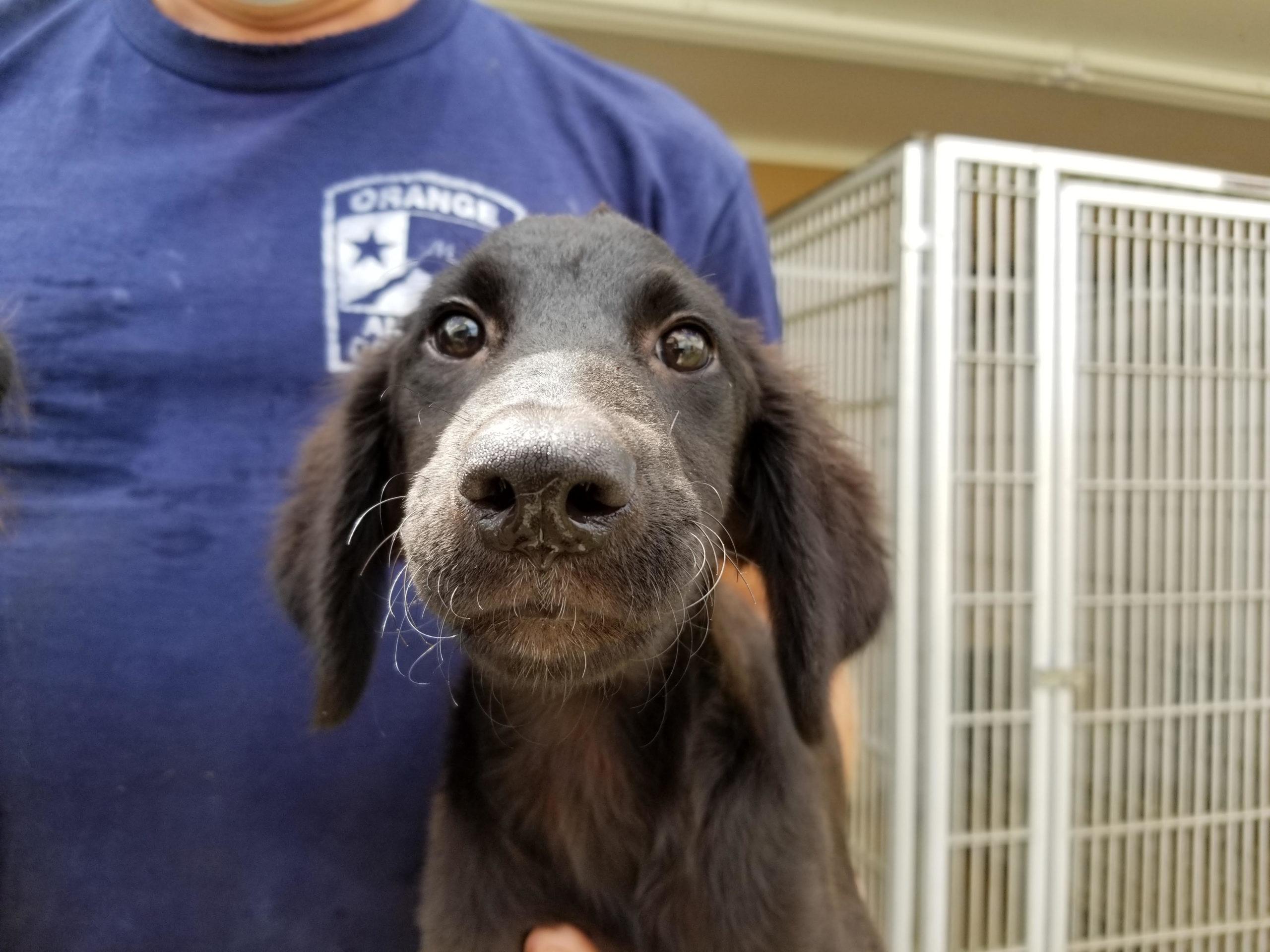 hurricane puppy rescue shelter adoption