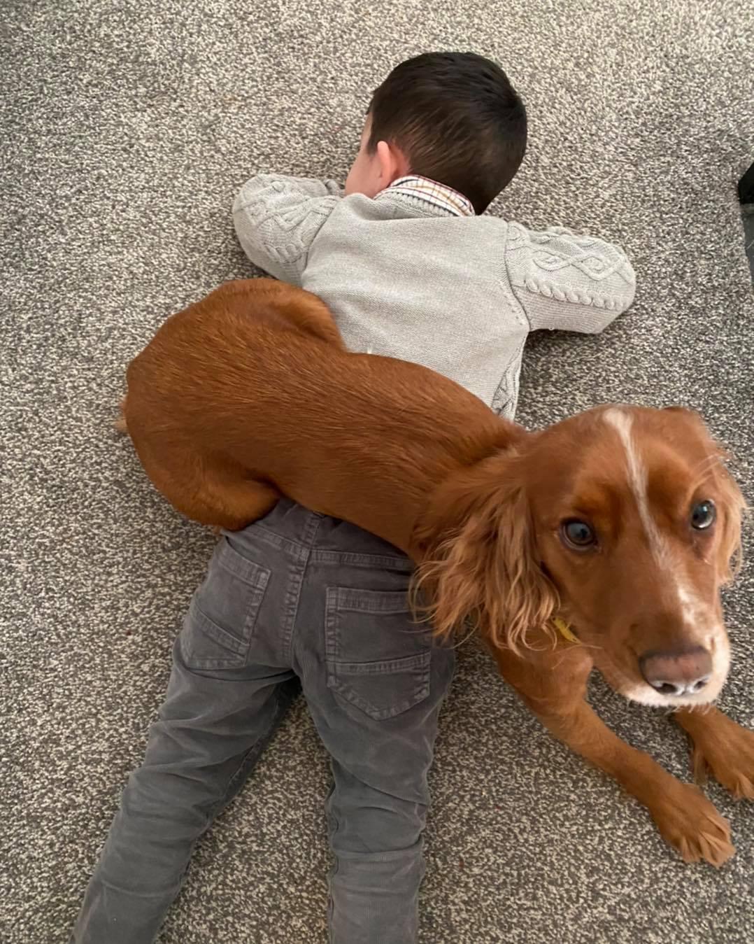 boy autism assistance dog