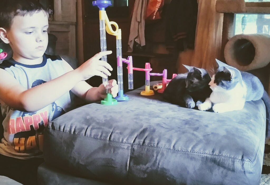 rescue kitten adopted boy