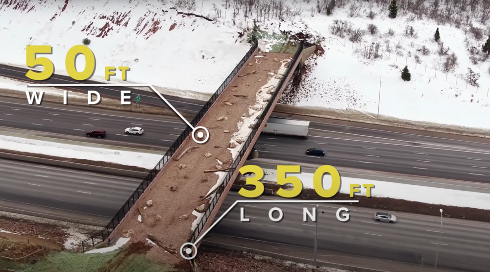 The wildlife overpass is 50 feet wide and 350 feet long.