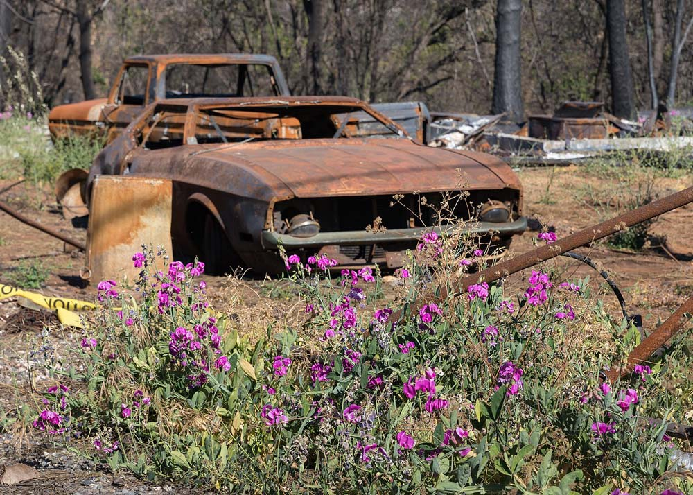 Much of Paradise, California, was burned to the ground.
