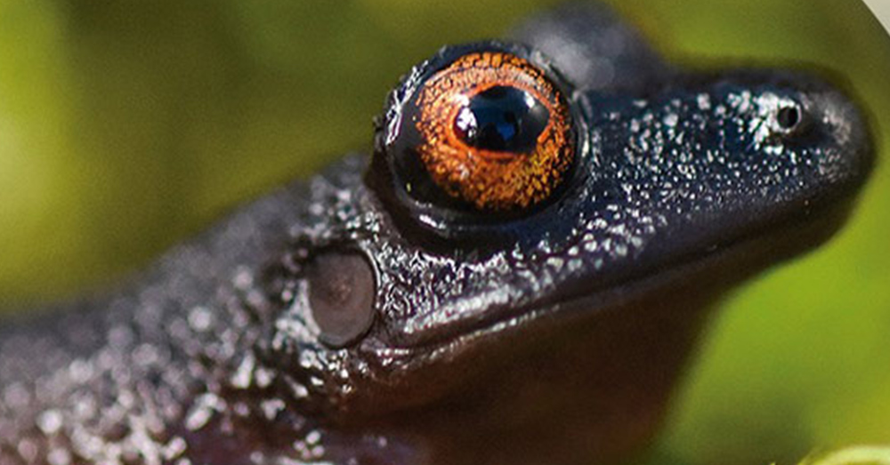 A new species of frog was discovered in Bolivia.