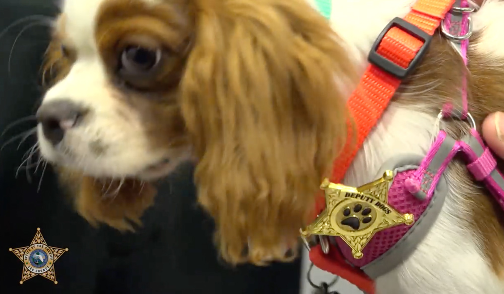 Gunner will be helping children in Florida learn about safety.