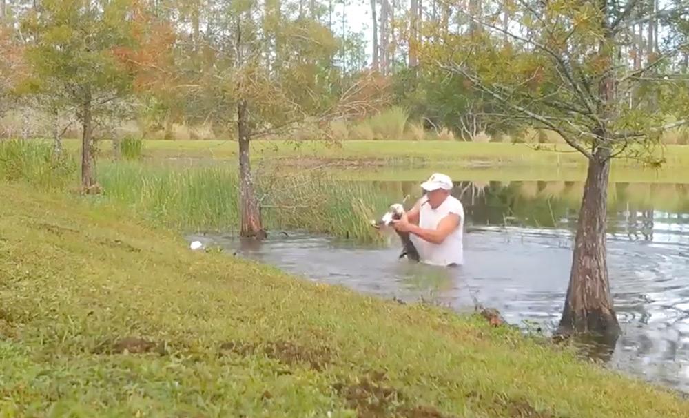 74-year-old Richard Wilbanks saved Gunner from an alligator.