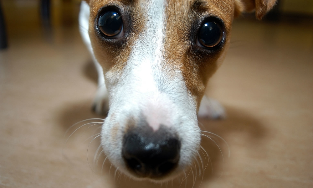 Anxiety In Dogs: Easy Ways To Understand And Help Calm Your Anxious Dog