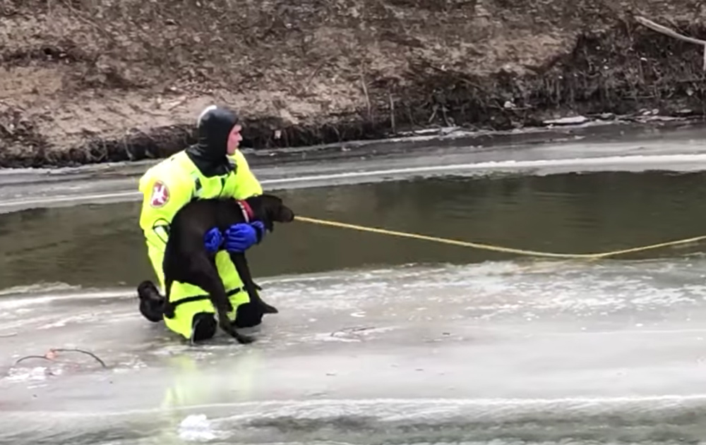 The firefighter holds Lola in his arms as the other firefighter pulls them to shore.