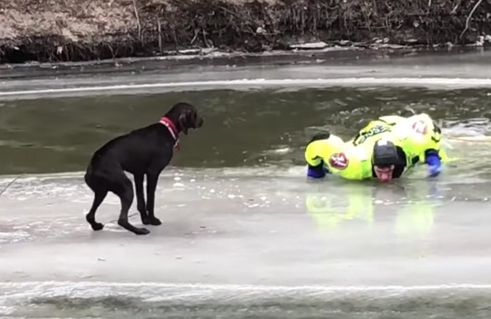 The firefighter lays on the ice to distribute his weight and avoid cracking it further.