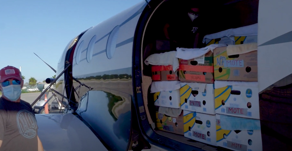 The turtles were flown to the Florida Keys for treatment.