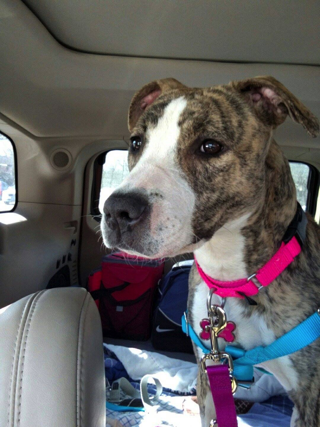 rescue dog forever home paradise