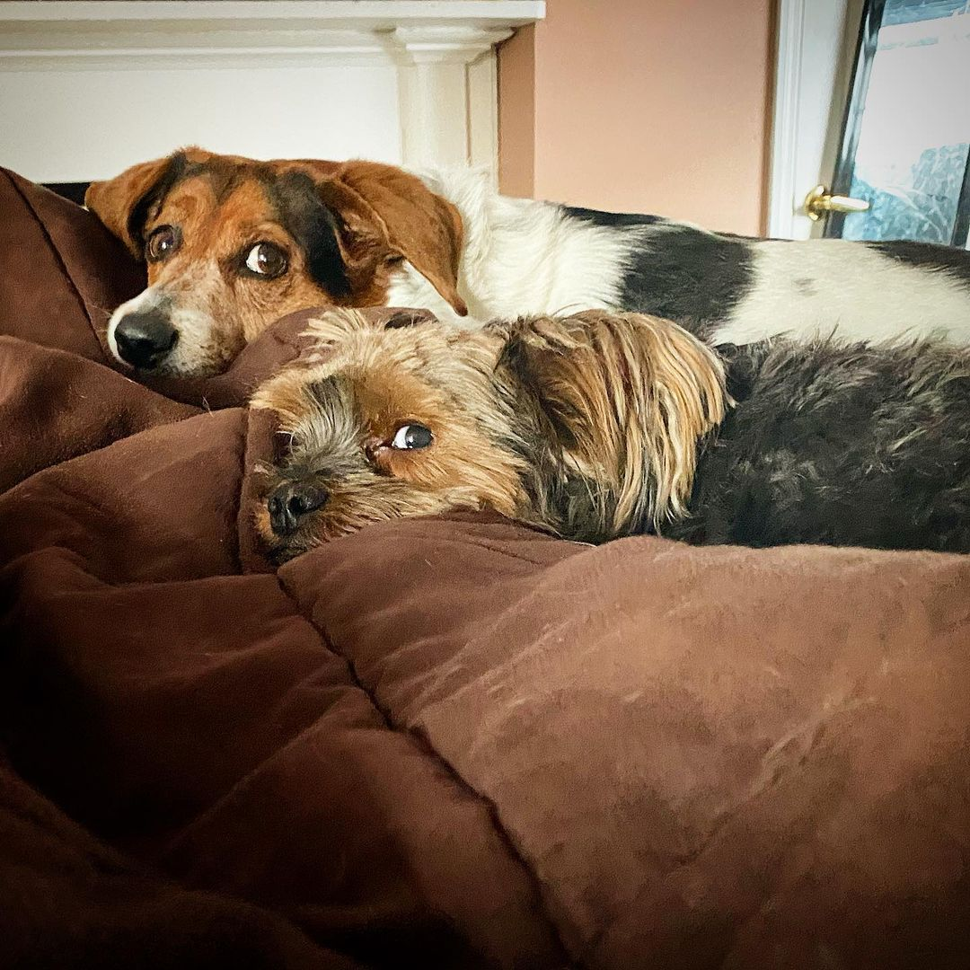 rescue dogs bonded paralyzed