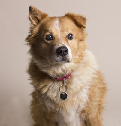 rescue dog trust issues forever home