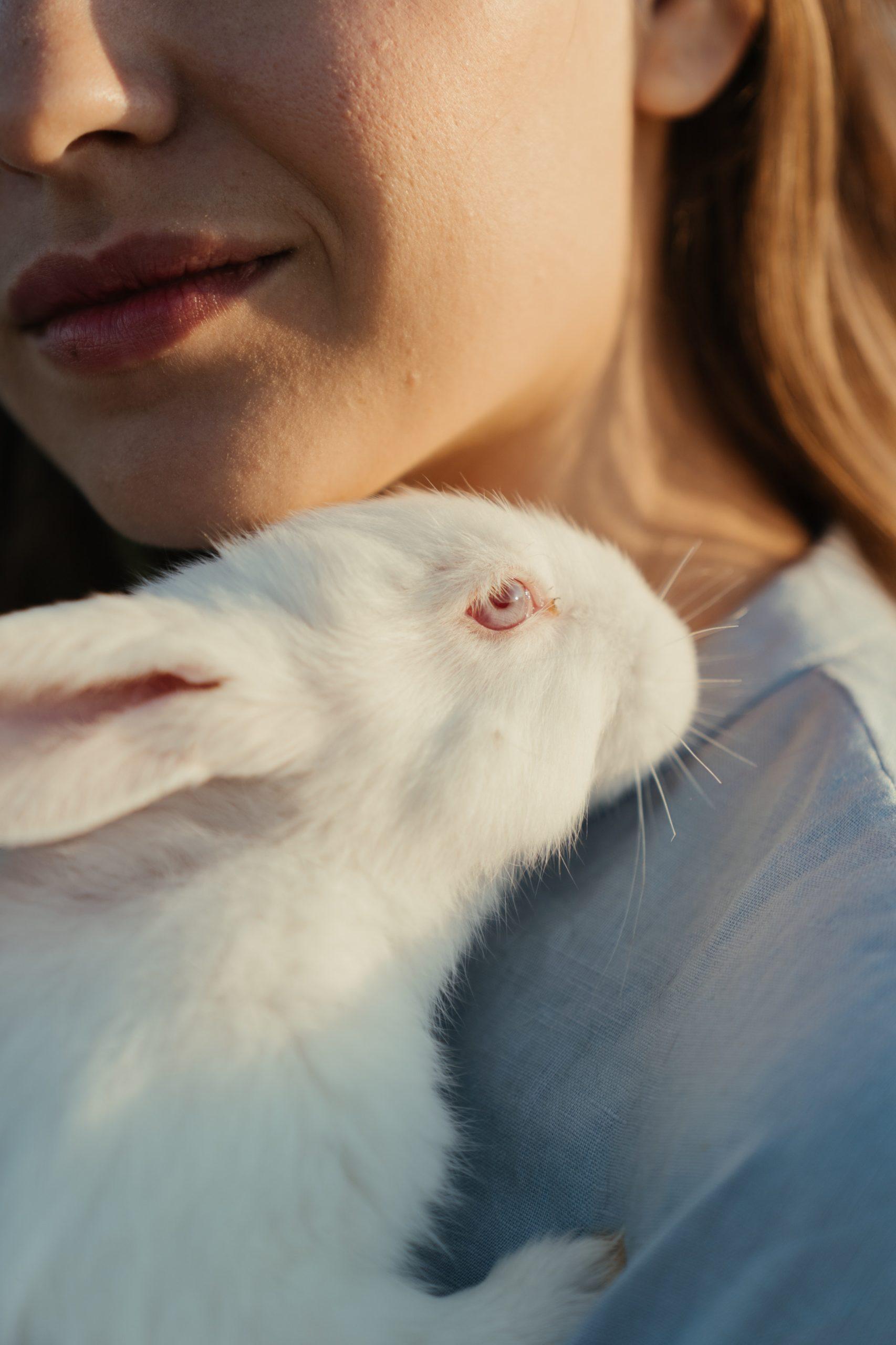 albino animals rabbit