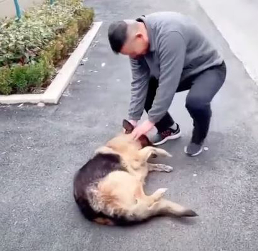 This dog will never forget her human friend.