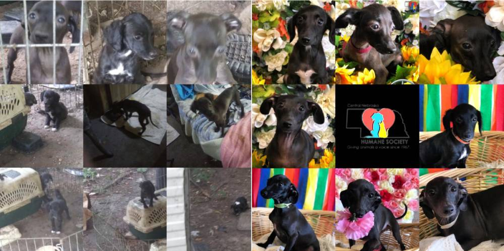 Kind Souls Look After Litter of Neglected Puppies, Dog with Reptilian Skin Condition, and Tripod Kitty