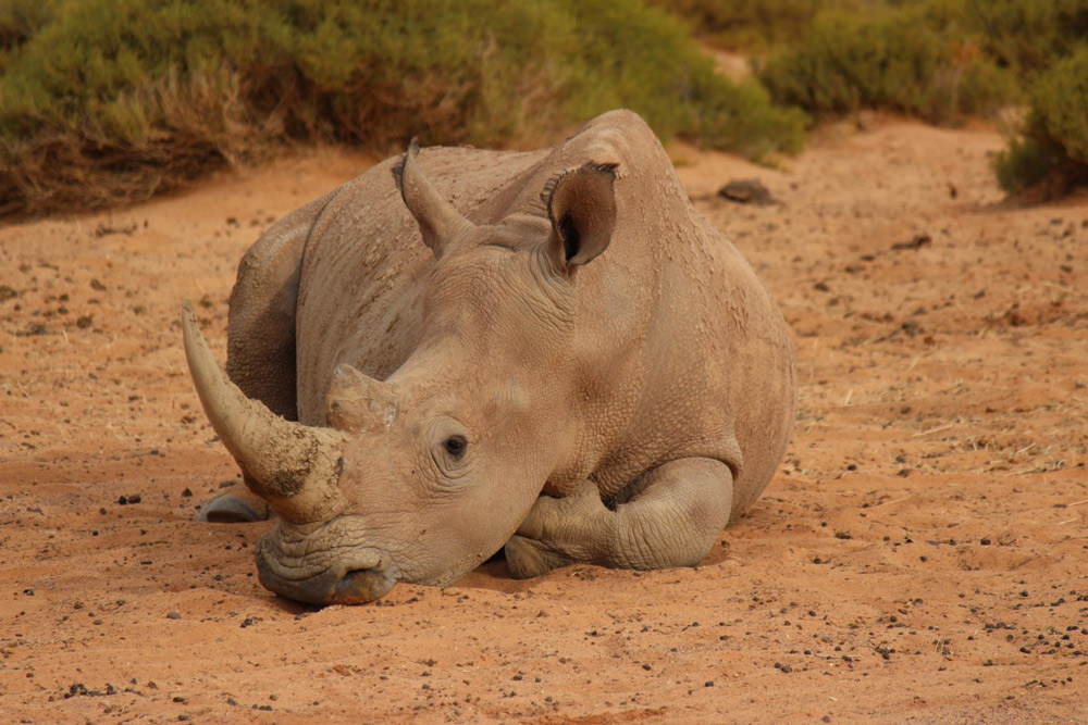 South Africa lifted a ban on selling and buying rhino horn in 2018.