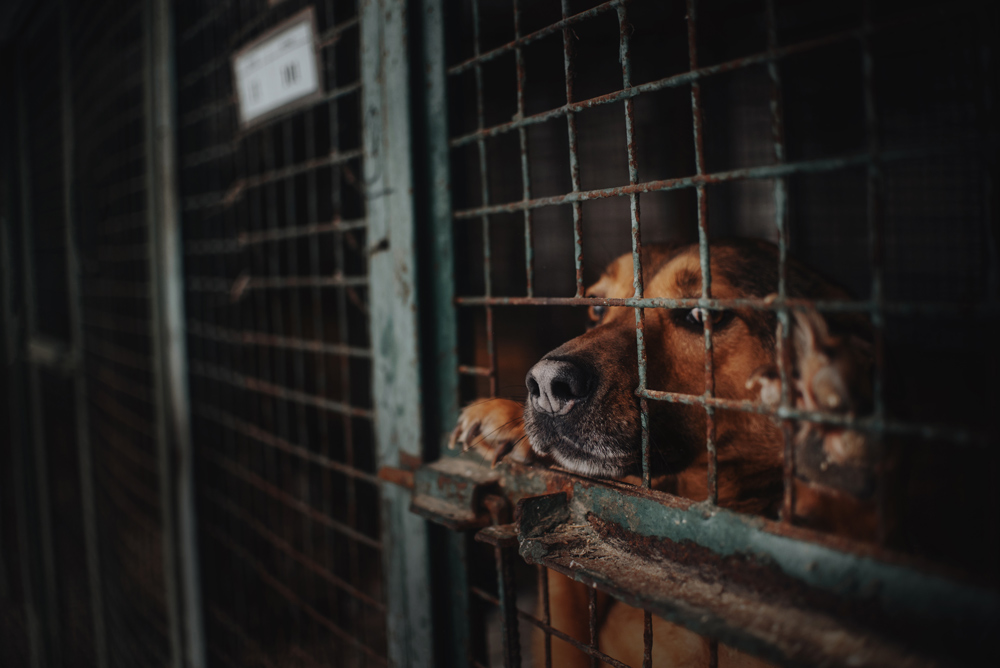 People around the world are speaking out against the dog meat industry.