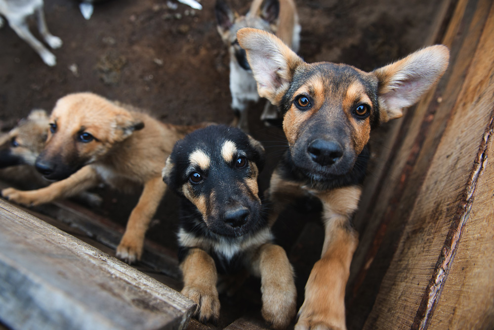 Consumption of dog meat is not as popular as it once was in South Korea.