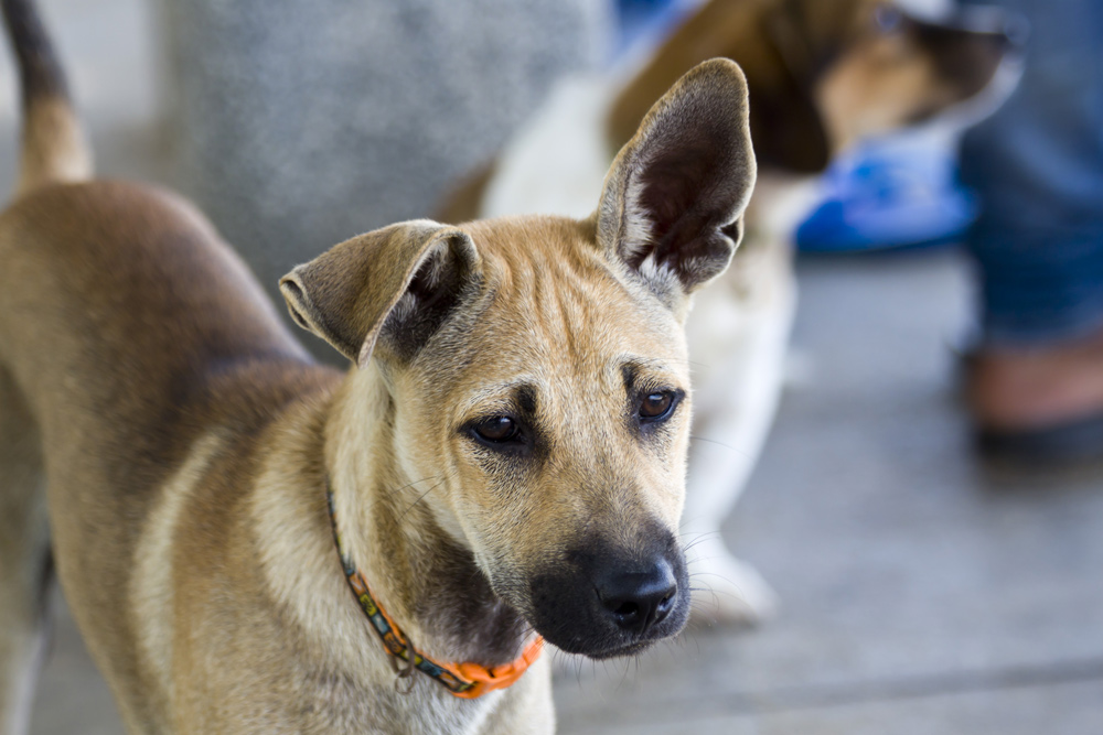Pets and street dogs in southeast Asia are routinely stolen by thieves and sold on the black market.