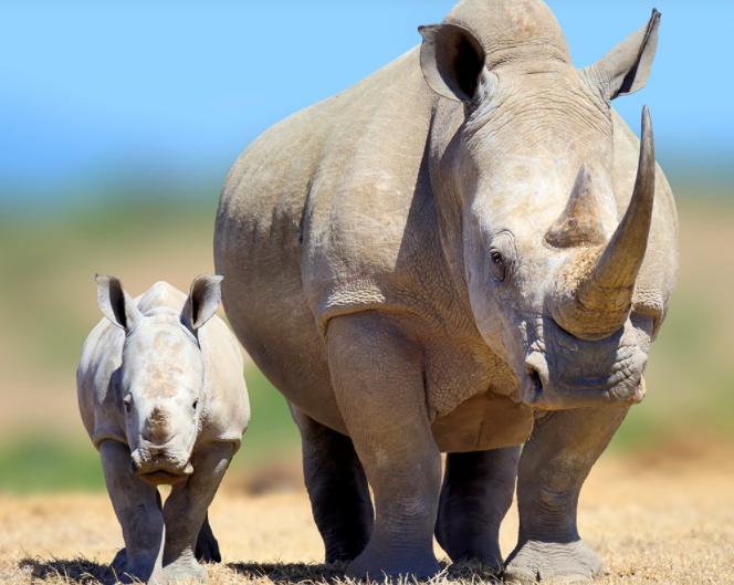 Ban Rhino Horn Trade