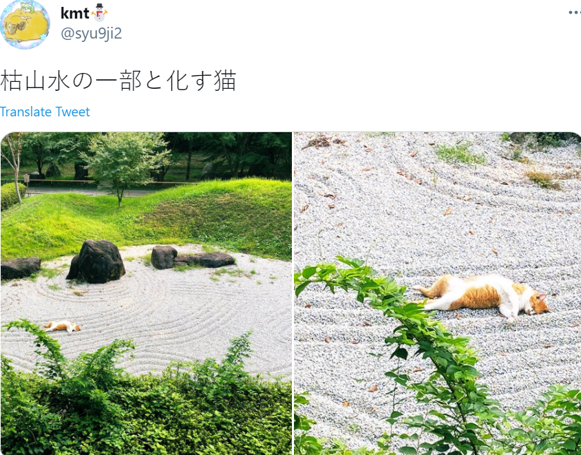 Cat Caught Taking A Nap In The Middle Of A Japanese Zen Garden