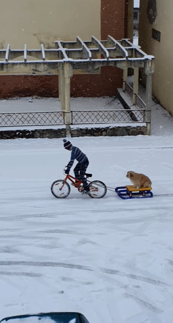 Little Dog Gets The Most Amazing Sled Ride From His BFF