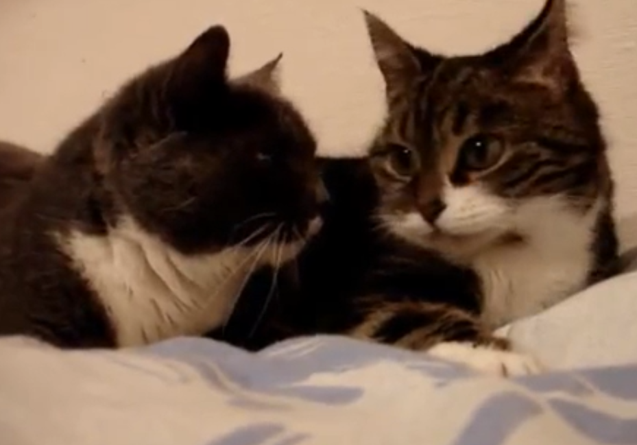 Cats Snuggle Up And Have A Romantic 'Conversation' With One Another