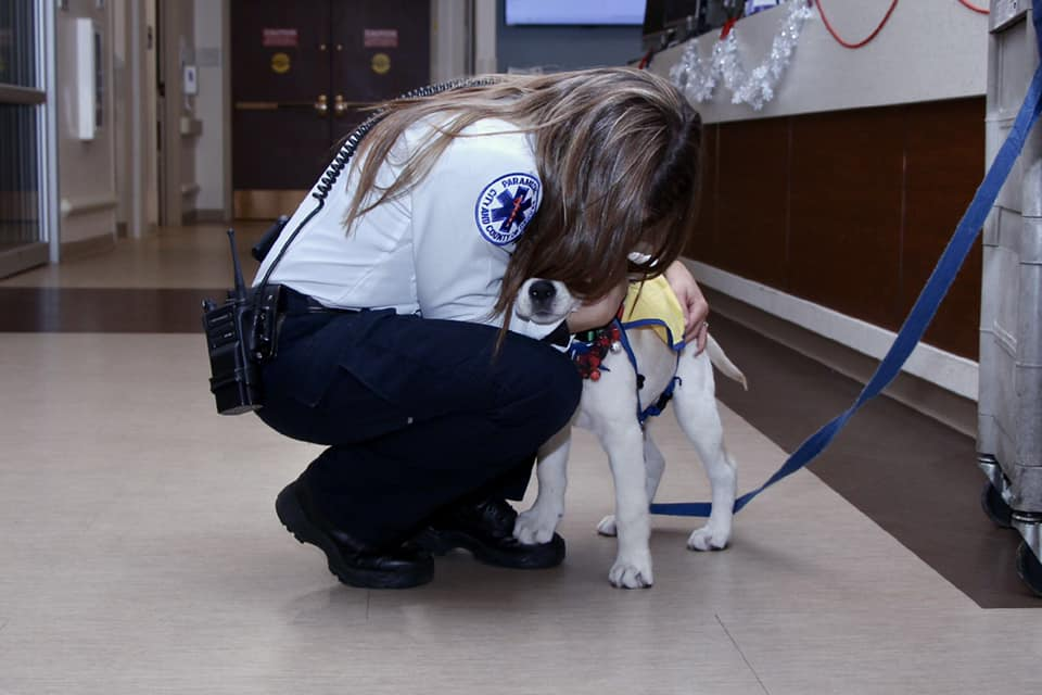 a paramedic is crouched in a hospital hugging service dog, Wynn