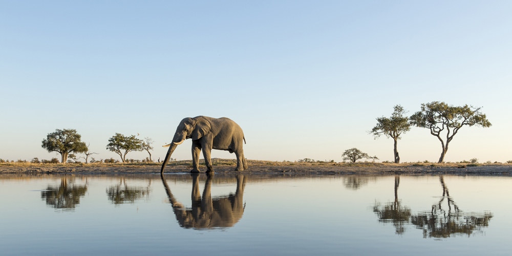 Northern Botswana is home to Africa's largest elephant population.