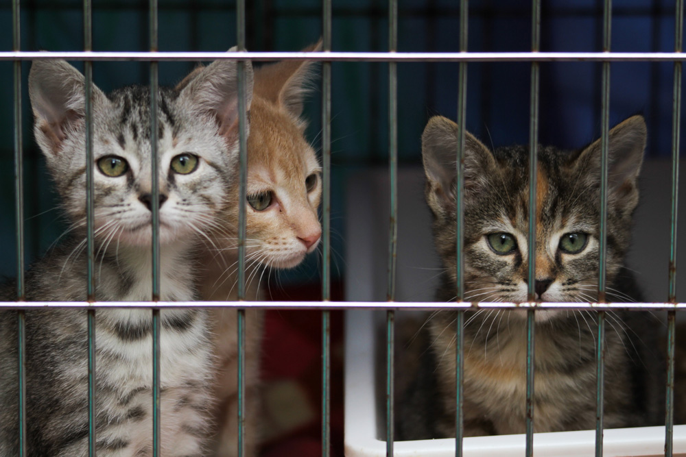 Craigslist prohibits selling pets outright, but leaves a loophole for