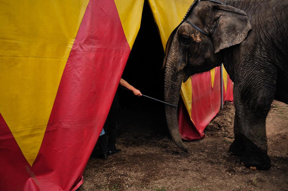 Circus animals around the world need your help.