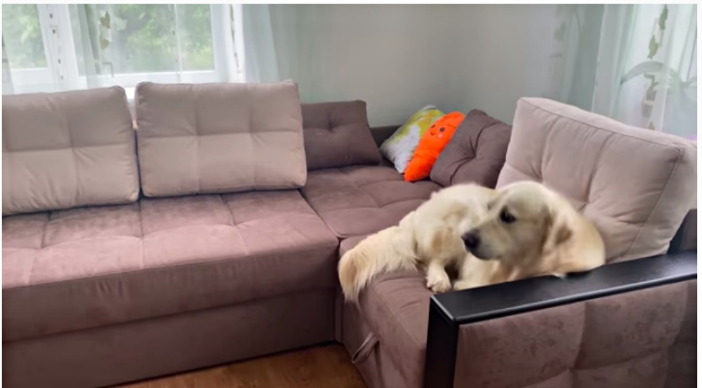 Owner Tries To Introduce Dog To New Kitten But Pup Refuses To Even Look At Him