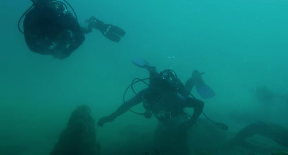 SCUBA divers explore the underwater forest.