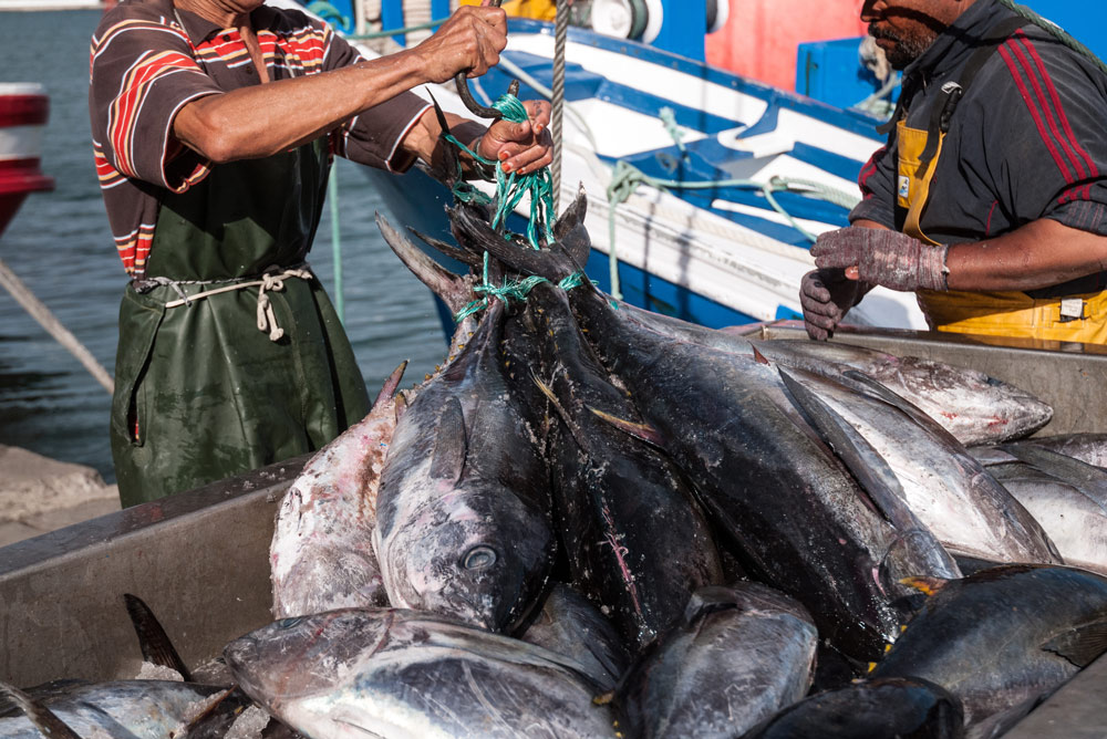 Tuna fishing has devastated the world's tuna population.
