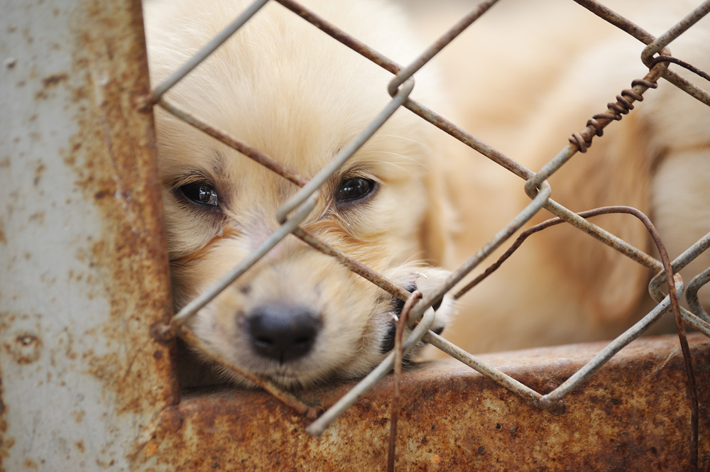 Petland is the largest retailer of puppy mill dogs in the United States.
