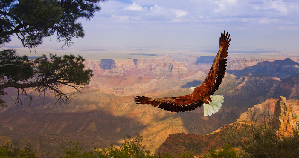 The Grand Canyon region is home to many plants and animals.
