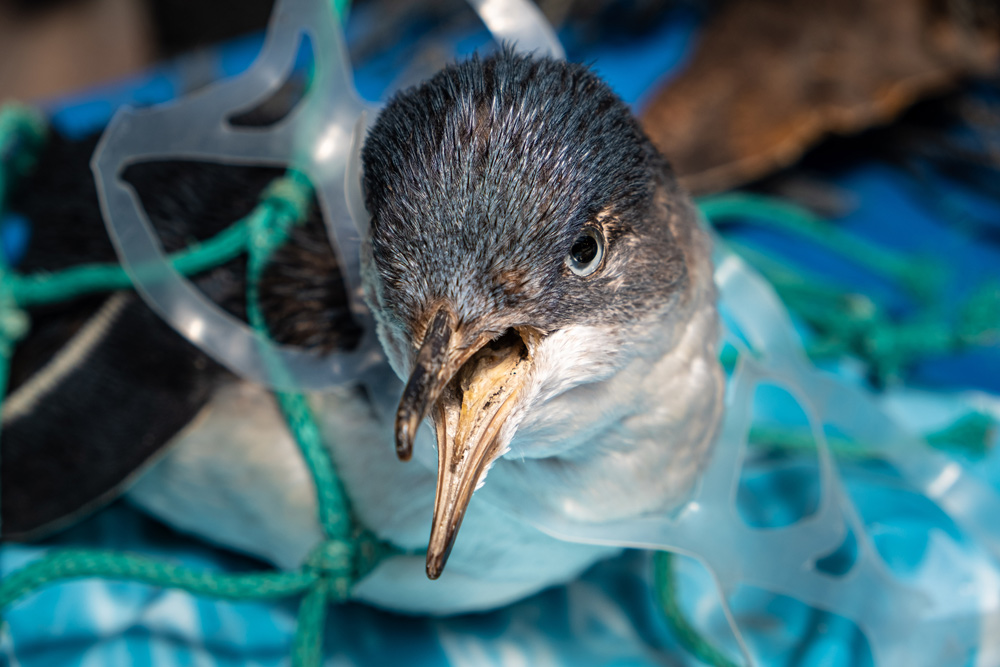 Our oceans and the animals that live there deserve a clean environment!