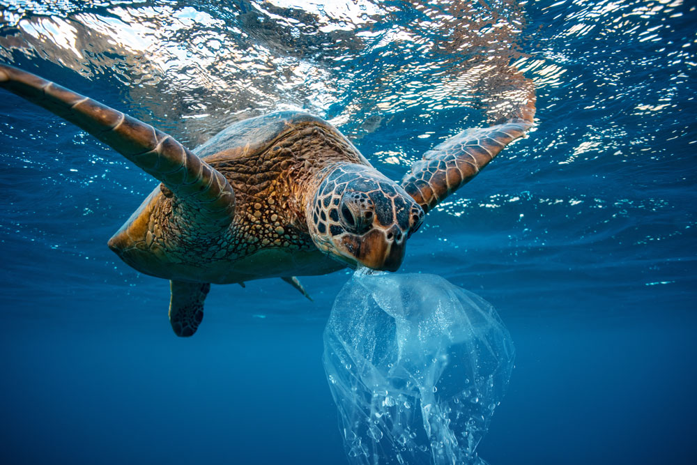 Some animals have died after ingesting plastic.