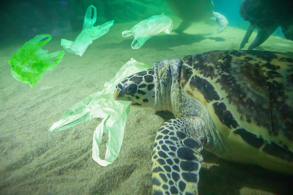 PLastic pollution is a threat to many marine species.