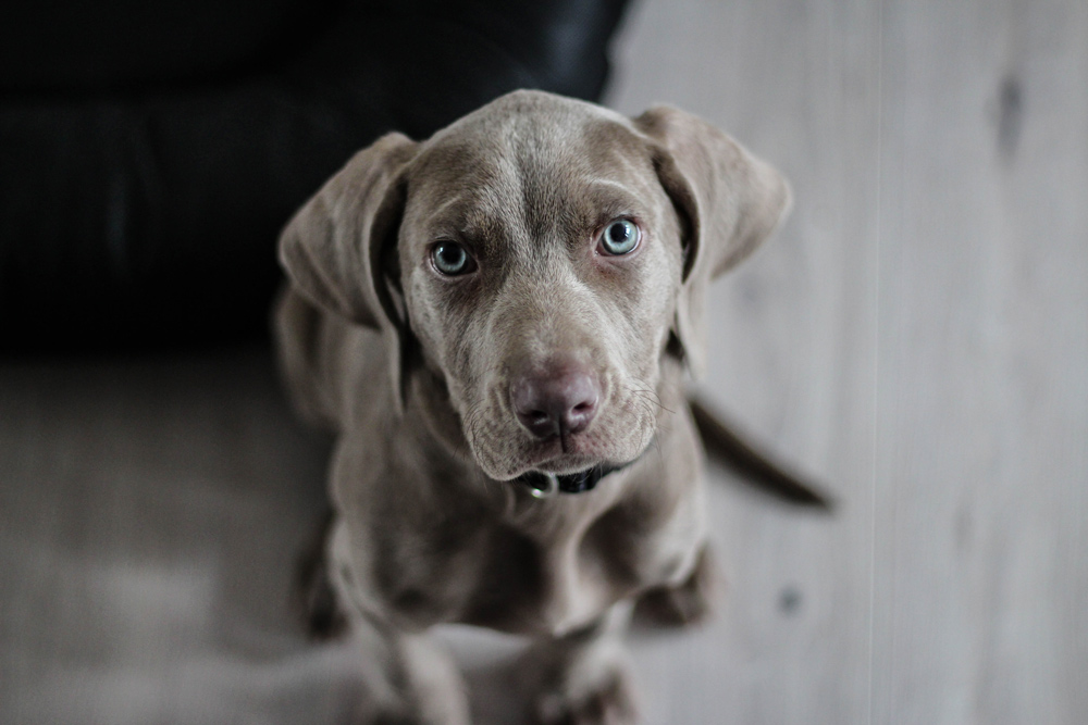 Your veterinarian can help you prevent and treat heartworm disease in your dog.