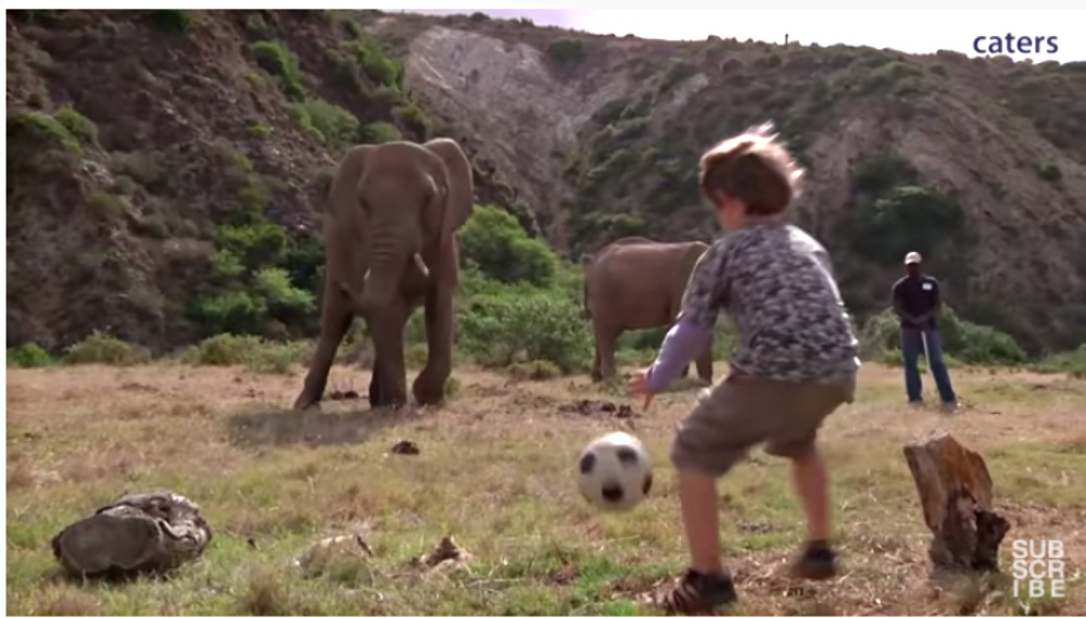 Elephant And Little Boy Warm Hearts With Kickball Game