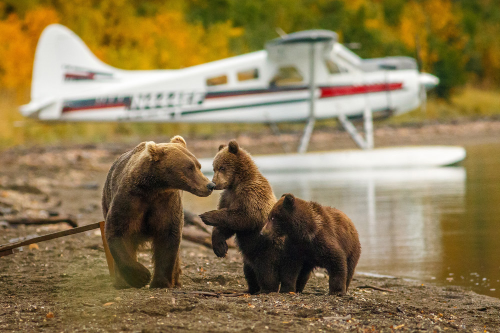 Wildlife refuges in Alaska have been opened up to predator control hunting.