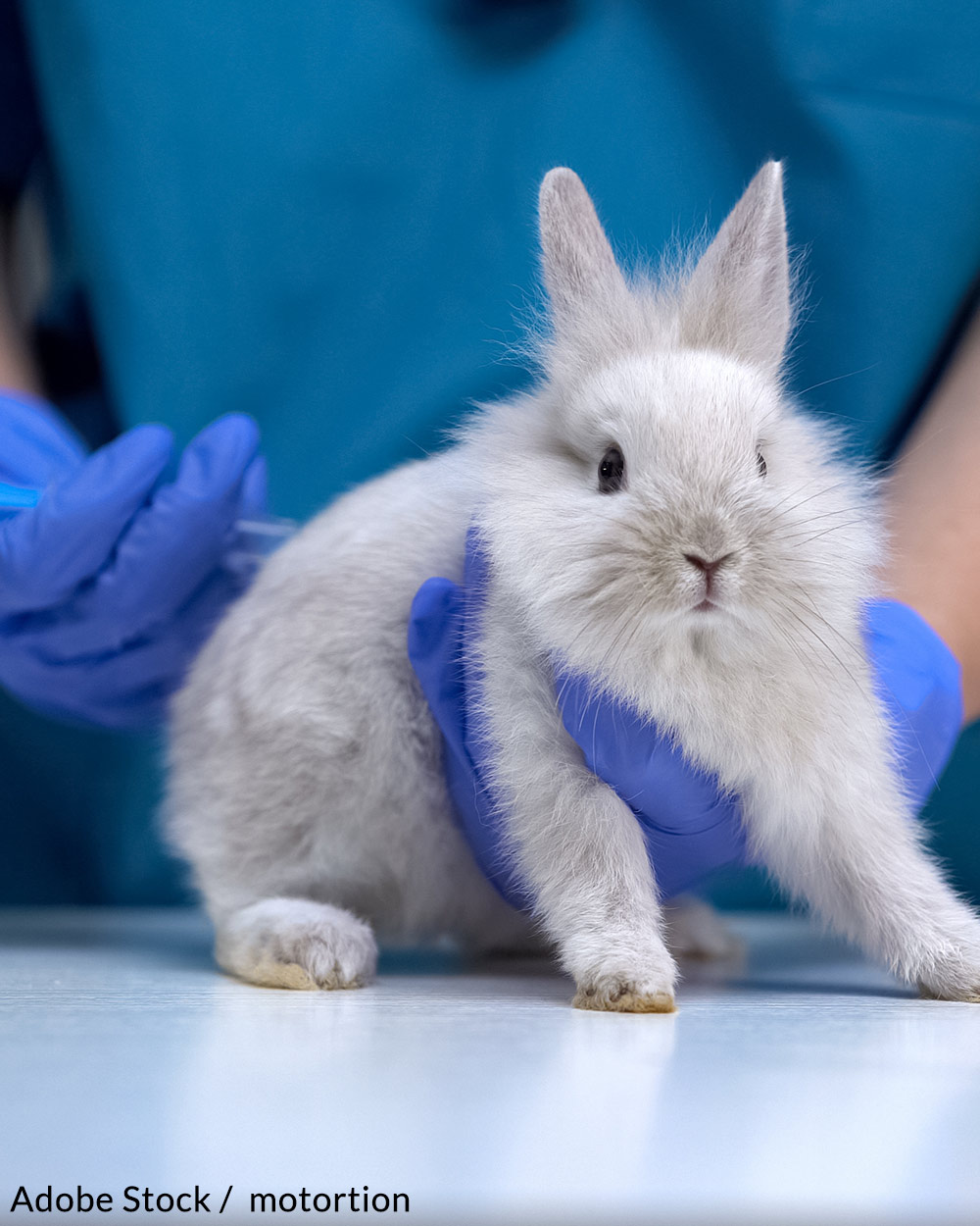 Help us end animal testing in the cosmetics industry.