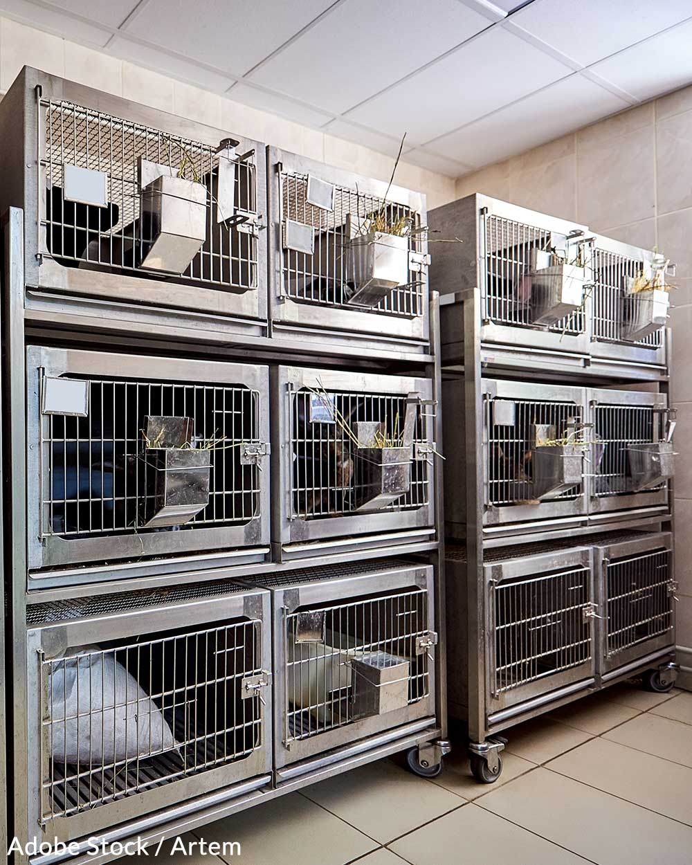 Millions of animals are killed every year in cosmetics testing procedures.