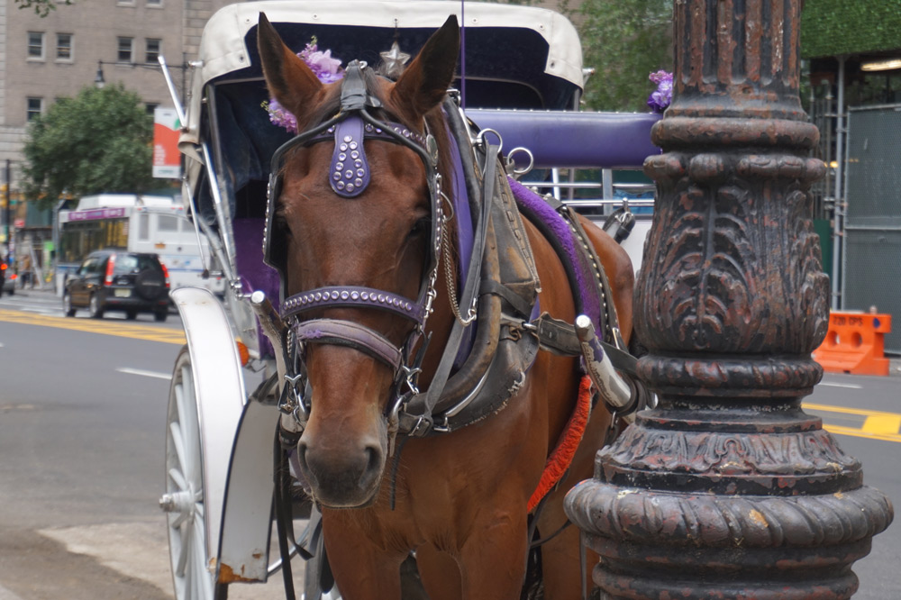 Horses can be spooked easily by vehicles or pedestrians.